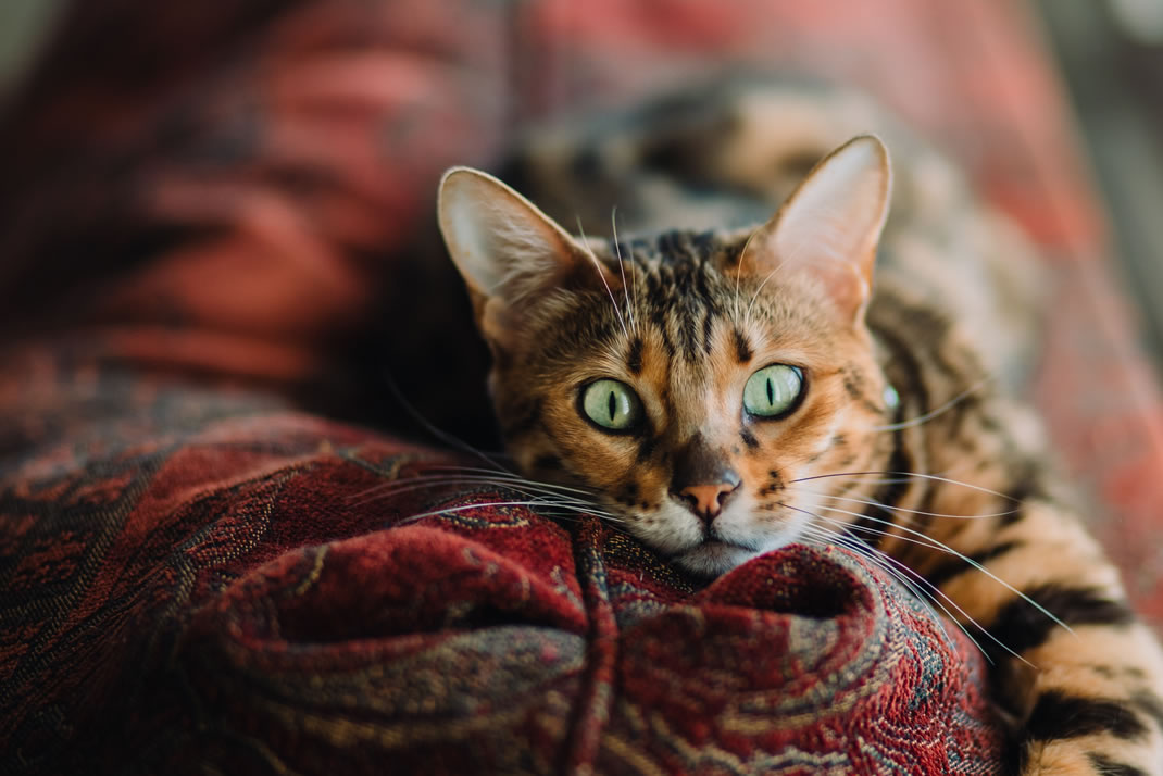 Cats and dogs have a third eyelid